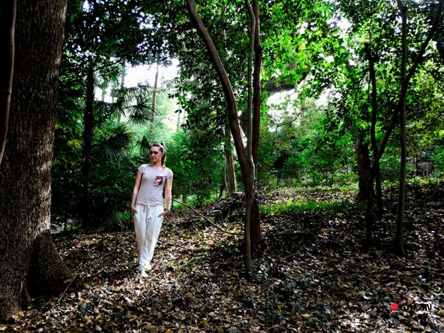 wisteria w Japonii