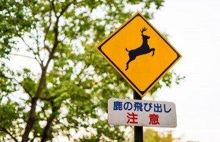 nara deers japan