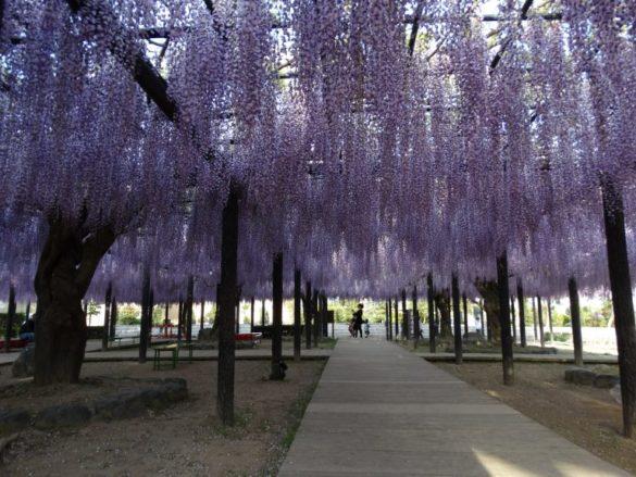 Wiosna wJaponii