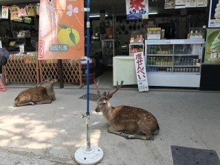 Nara- pierwsza stolica Japonii (cz.1)