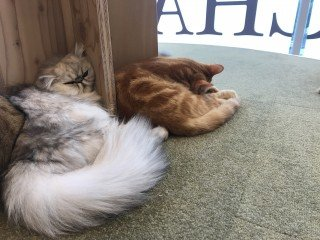 Kocie Kawiarnie