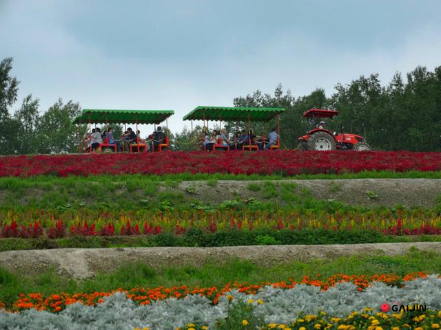 biei flower hill
