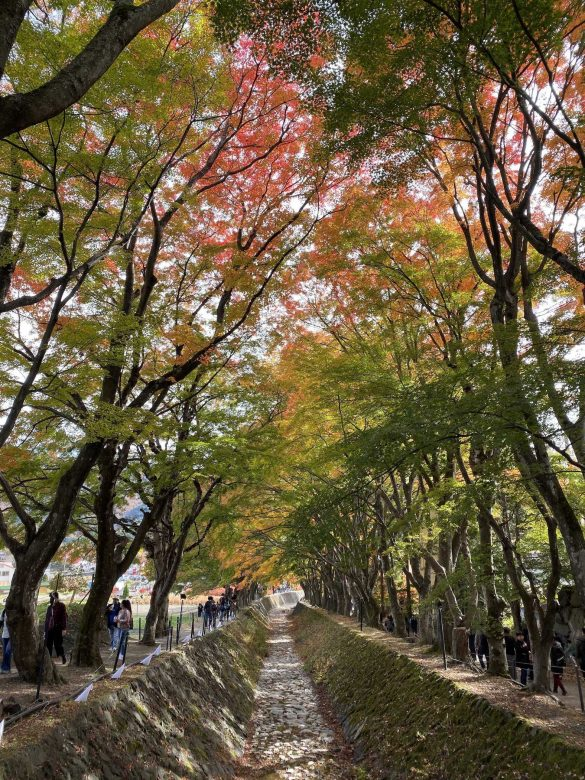 Czy jesień w Japonii jest najpiękniejsza na świecie? [galeria]