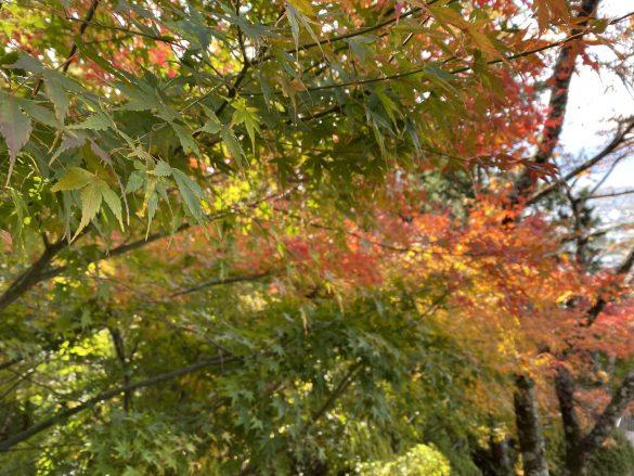 japonia jesień fuji