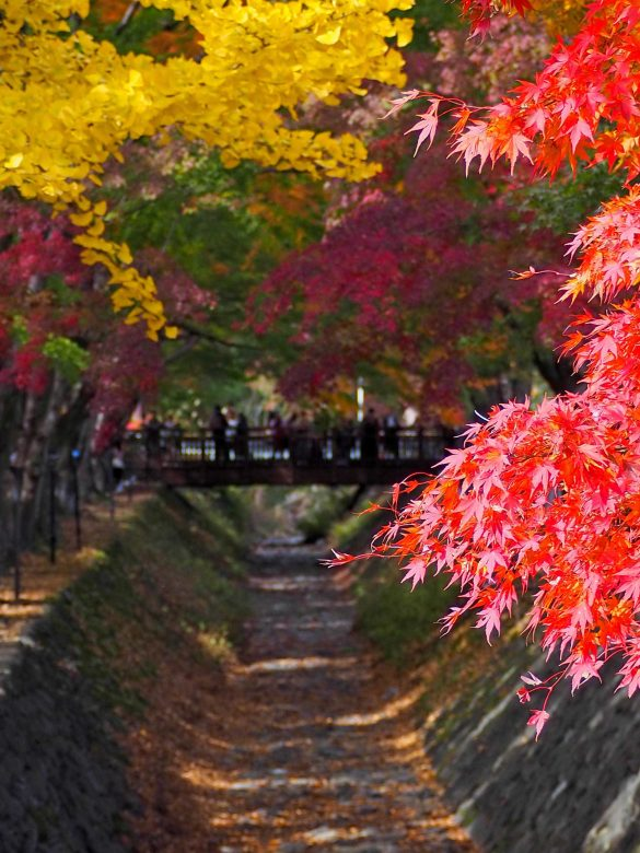 Czy jesień wJaponii jest najpiękniejsza naświecie? [galeria]