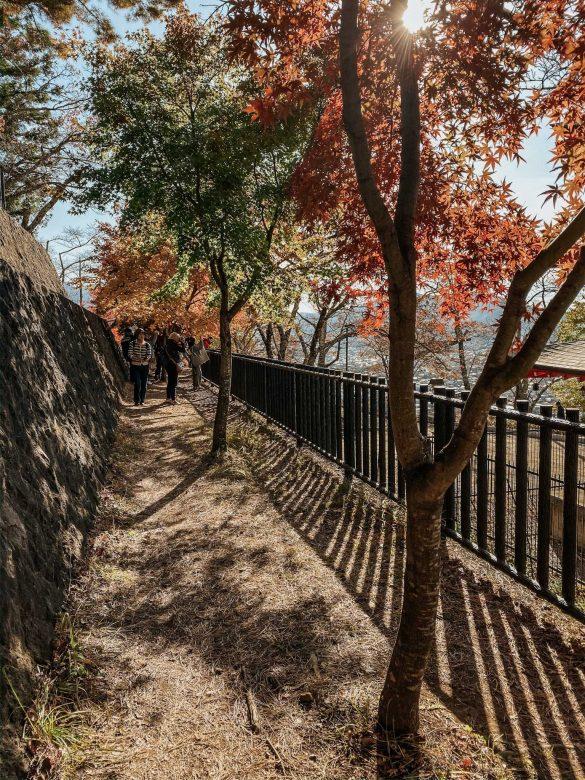 korytarz zkolorowymi drzewami