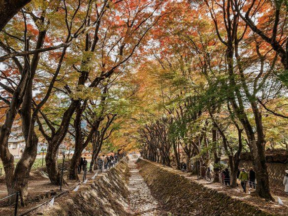 maple corridor kawaguchiko