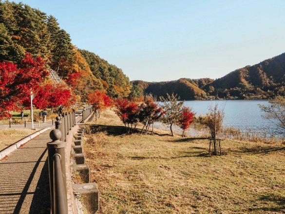 alejka zjesiennymi drzewami japonia